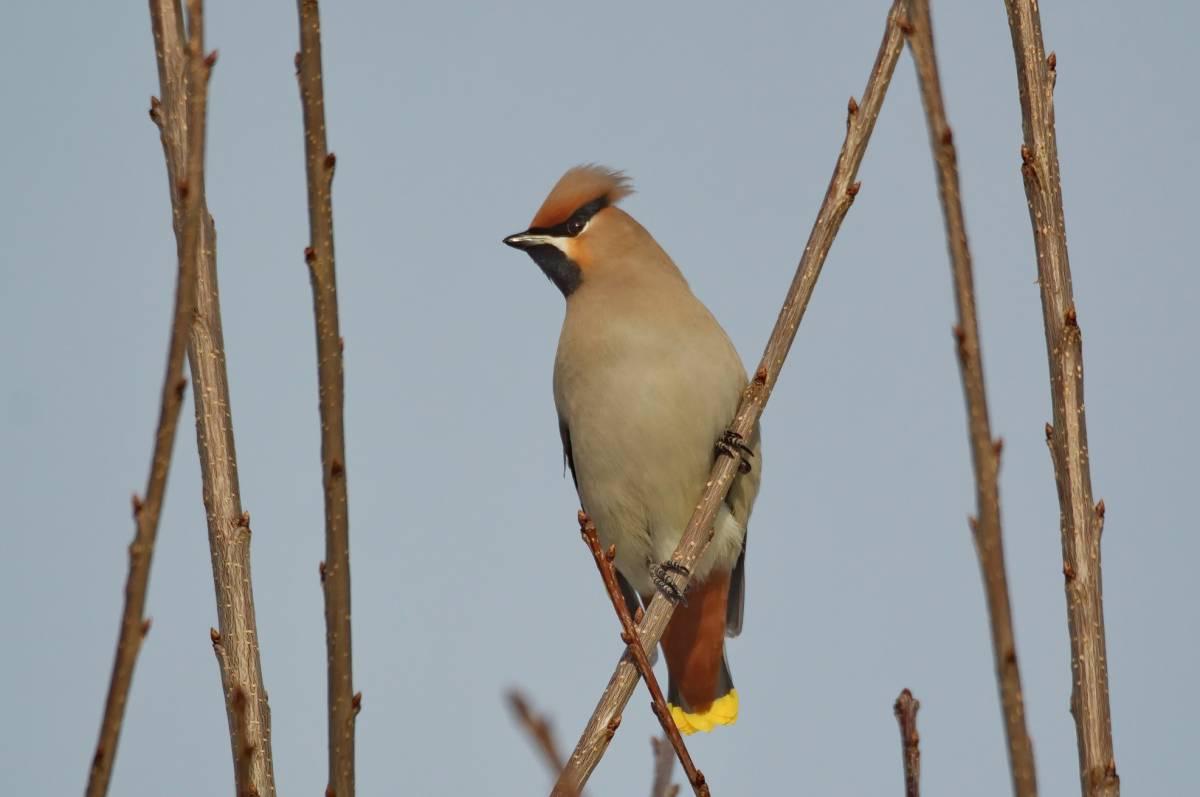 зоне птицы хакасии фото и названия слушает слова советников