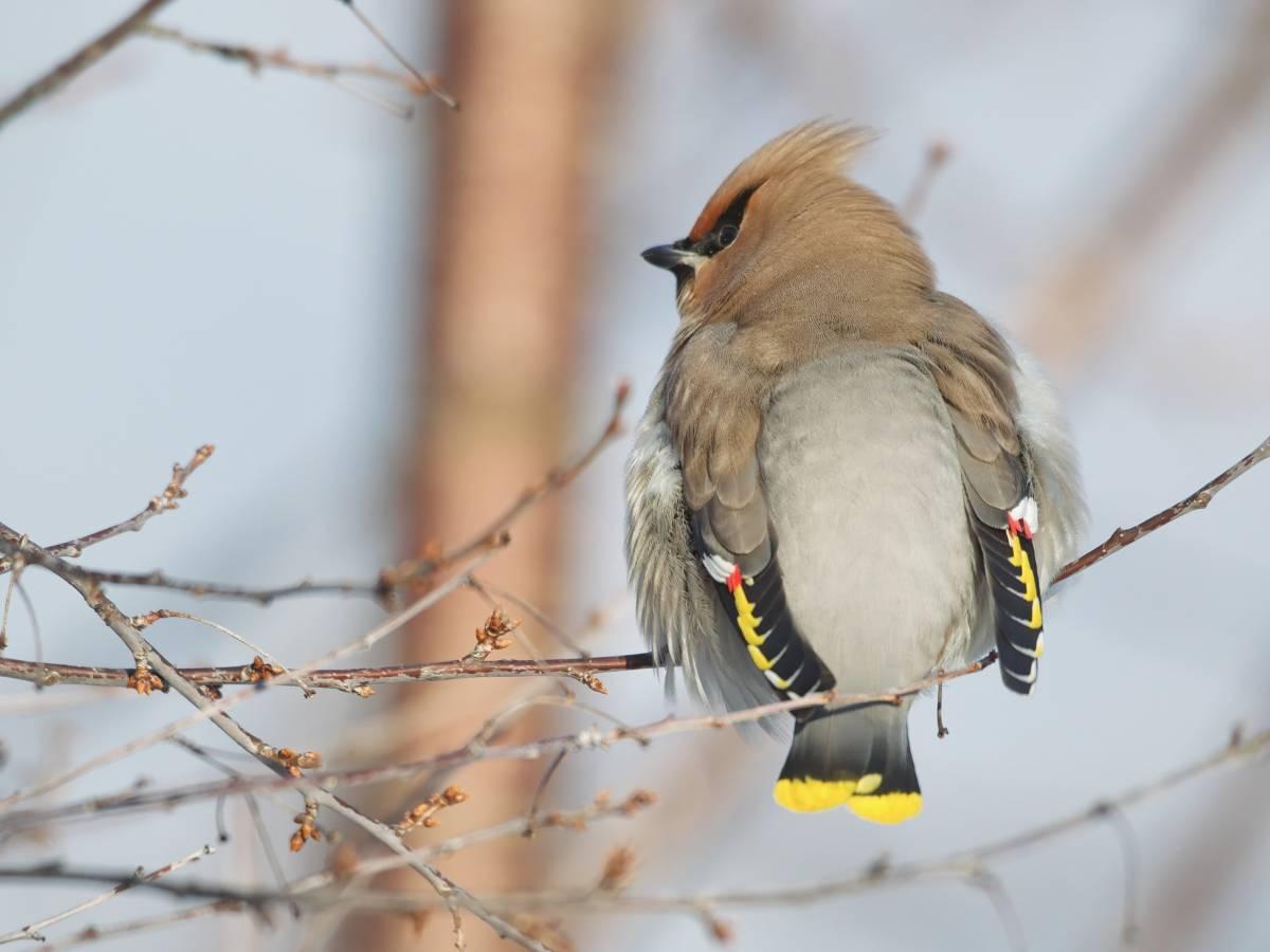 птицы хакасии фото и названия очень