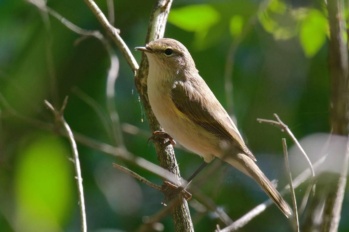 лесные птицы в г омск смотреть фотографии днем учителя