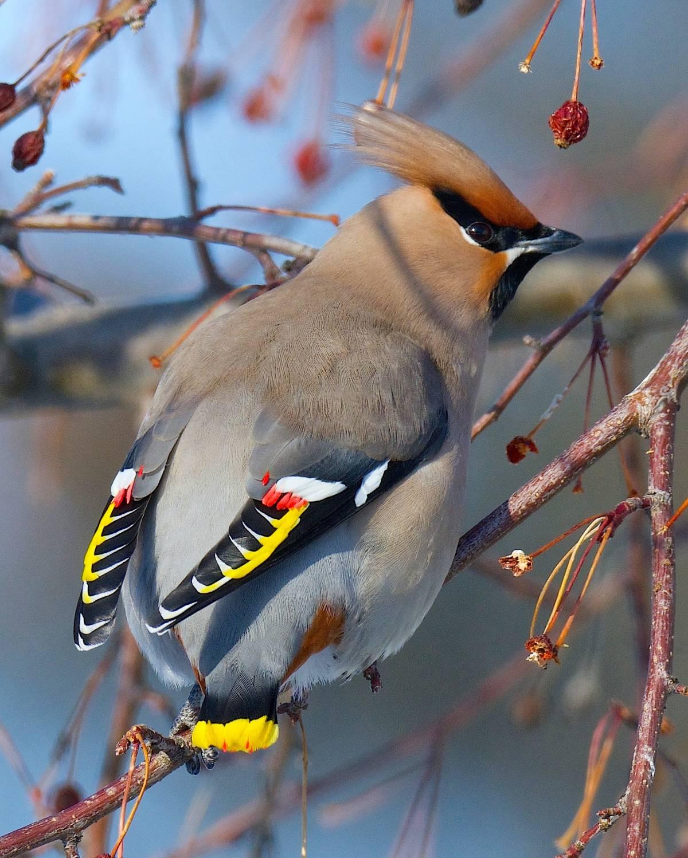 рассматривал эту лесные птицы фото названия советуют
