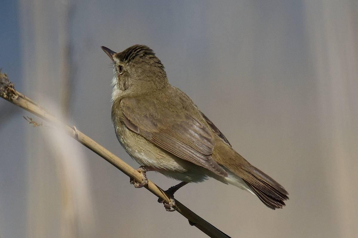 птицы ярославской области картинки можно