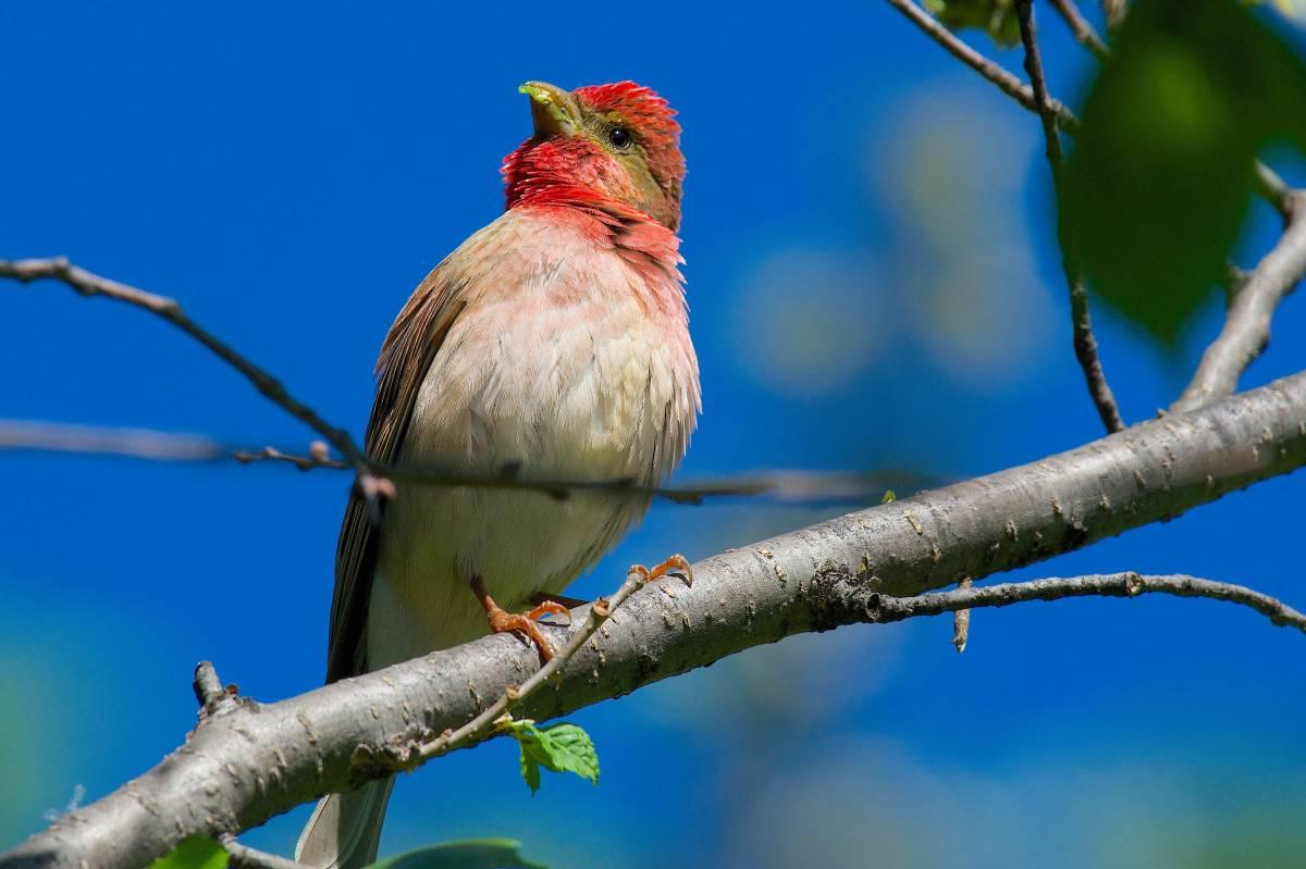 Картинки птиц омской области
