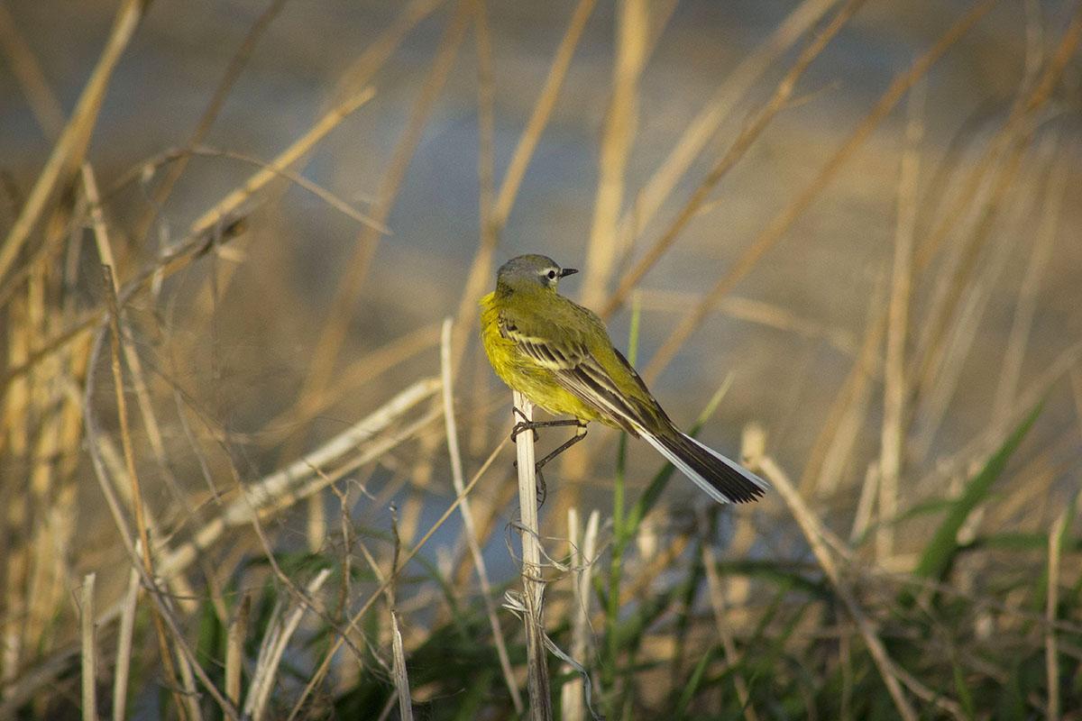 птица с желтым брюшком в самарских лесах