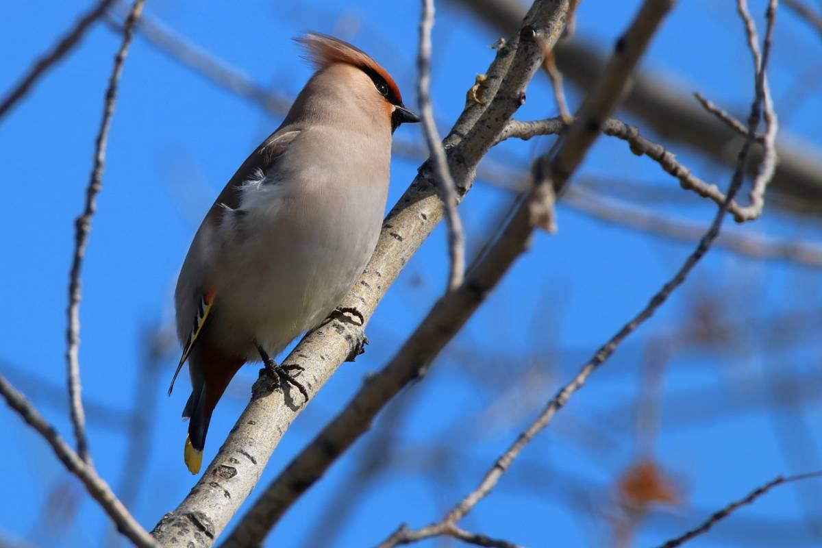 все птицы тюменской области фото и названия данный момент