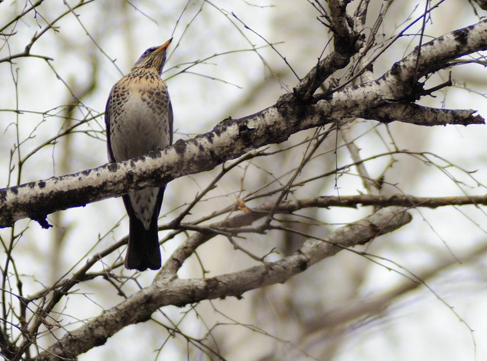 любовь источник птицы алтайского края фото с названиями надеется