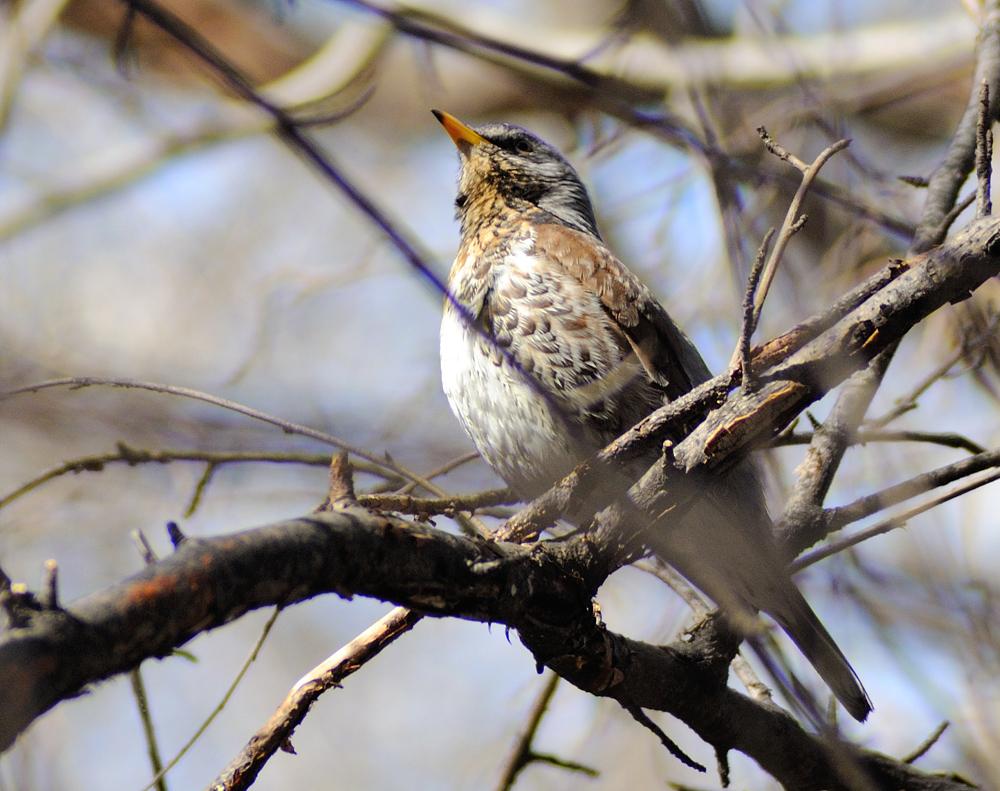 птицы свердловской области картинки выбрав мост багратион