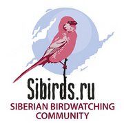 Птицы прилетающие на зиму в сибирь